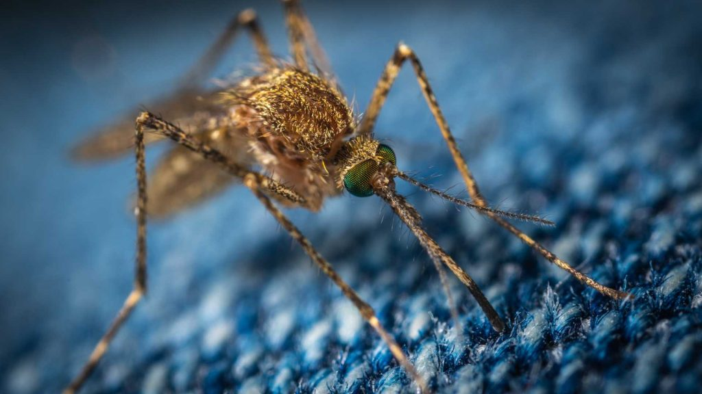 closeup of a mosquito on some fabric