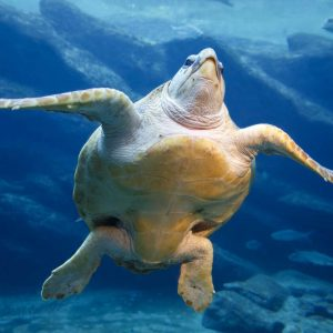 Leatherback Sea Turtle Tours in Grenada
