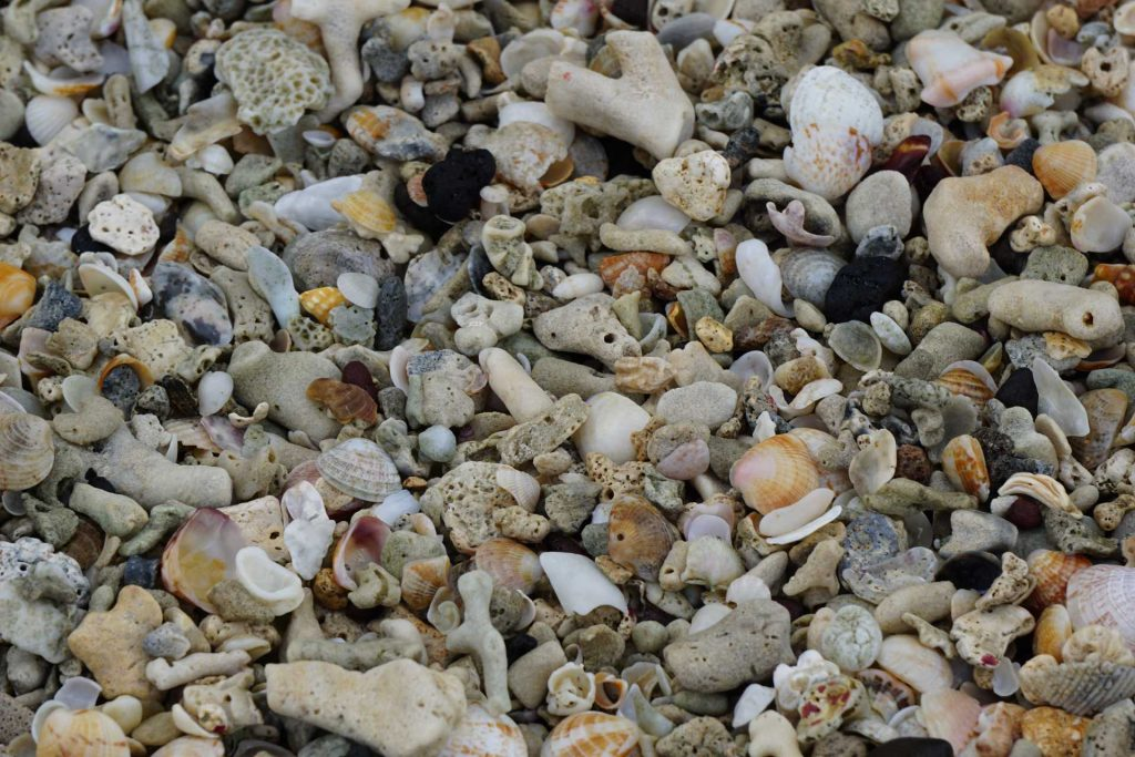 Beautifully intact seashells on Morne Rouge Beach in Grenada.