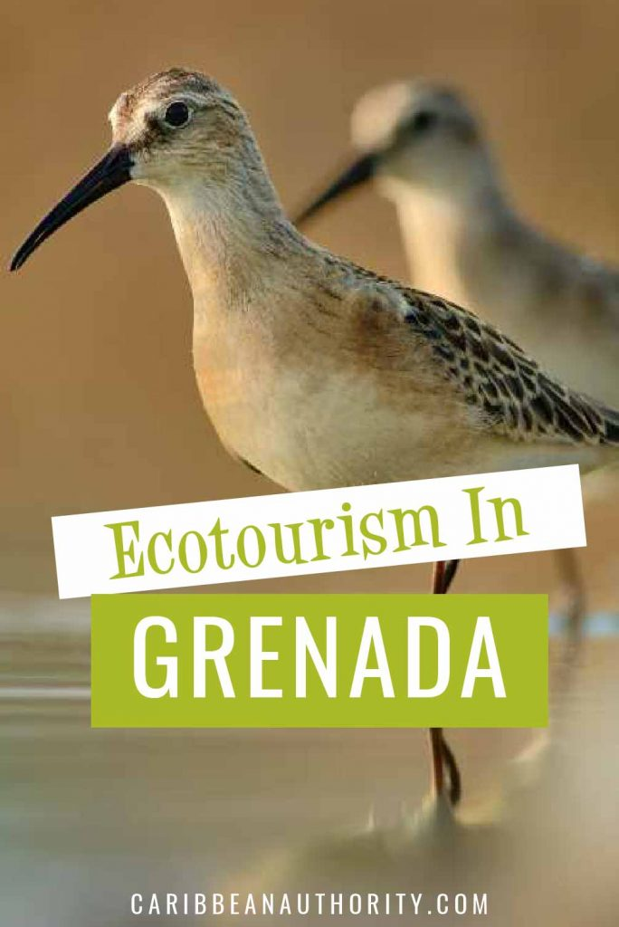 Pinterest pin for Grenada Ecotourism